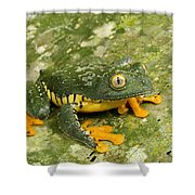 Amazon Leaf Frog Shower Curtain