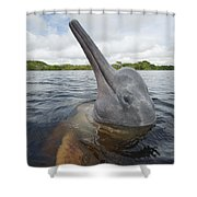 Amazon River Dolphin Spy-hopping Rio Shower Curtain