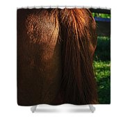 Amber Horse Tail Shower Curtain