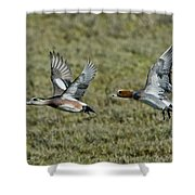 American & Eurasian Wigeons Shower Curtain