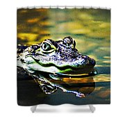 American Alligator 1 Shower Curtain