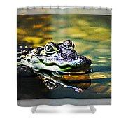 American Alligator 2 Shower Curtain