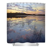 American Alligator Everglades Np Florida Shower Curtain