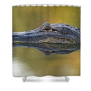American Alligator Reflection Shower Curtain