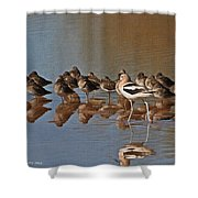 American Avocet And Sleeping Dowitchers Shower Curtain