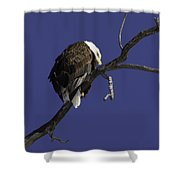 American Bald Eagle 1 Shower Curtain