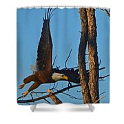 American Bald Eagle I Mlo Shower Curtain