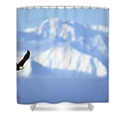 American Bald Eagle In Flight Shower Curtain