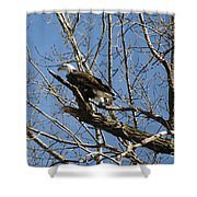 American Bald Eagle In Illinois Shower Curtain
