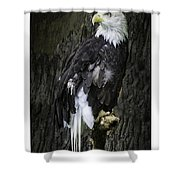 American Bald Eagle Shower Curtain by LeeAnn McLaneGoetz McLaneGoetzStudioLLCcom