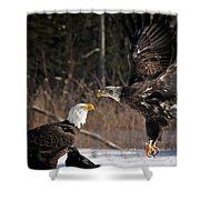 American Bald Eagles Shower Curtain