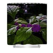 American Beauty Berry II Shower Curtain