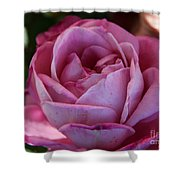 American Beauty IIi Shower Curtain