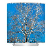 American Beech Shower Curtain