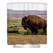 American Bison Shower Curtain