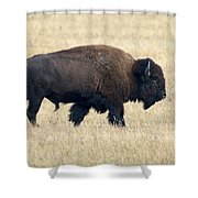 American Bison Bull Grand Teton Np Shower Curtain