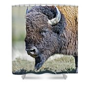 American Bison Closeup Shower Curtain