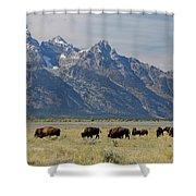 American Bison Herd Shower Curtain