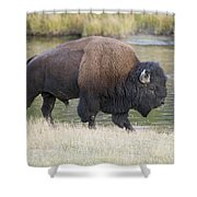 American Bison On The Madison River Shower Curtain