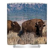 American Bison Trio Shower Curtain