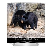 American Black Bear  Shower Curtain