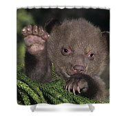 American Black Bear Cub Wildlife Rescue Shower Curtain