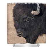 American Buffalo No.2 Shower Curtain