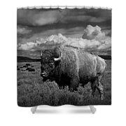 American Buffalo Or Bison In The Grand Teton National Park Shower Curtain
