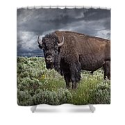 American Buffalo Or Bison In Yellowstone Shower Curtain