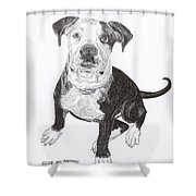 American Bull Dog As A Pup Shower Curtain by Jack Pumphrey
