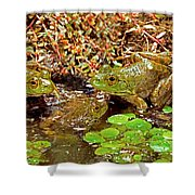 American Bullfrogs Rana Catesbeiana Shower Curtain
