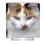 American Calico Cat Portrait Shower Curtain
