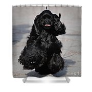 American Cocker Spaniel In Action Shower Curtain by Camilla Brattemark