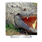 American Crocodile Shower Curtain