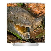 American Crocodile Shower Curtain