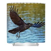 American Crow Flying Over Water Shower Curtain