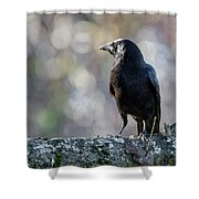 American Crow Square Shower Curtain