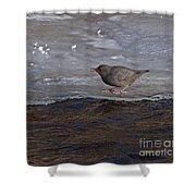 American Dipper   #5851 Shower Curtain