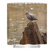 American Dipper   #7879 Shower Curtain