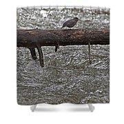American Dipper   #7963 Shower Curtain