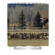 American Elk   #4305 Shower Curtain