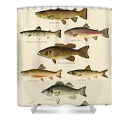 American Game Fish Shower Curtain
