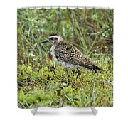 American Golden Plover Shower Curtain