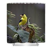 American Goldfinch 5 Shower Curtain