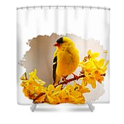 American Goldfinch Branch Of Forsythia Shower Curtain