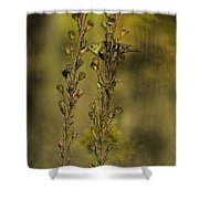 American Goldfinch Eating Seeds Shower Curtain