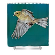 American Goldfinch Hen In Flight Shower Curtain