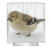 American Goldfinch In The Snow Shower Curtain