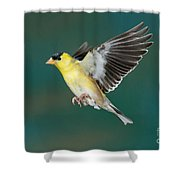 American Goldfinch Male-flying Shower Curtain