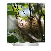 American Goldfinch Nest Under Construction Shower Curtain